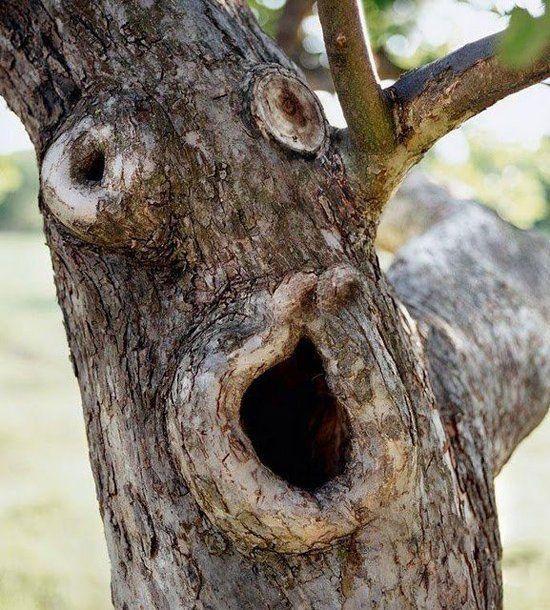 Strange Trees Growing In Strange Places 55 pics Izismilecom