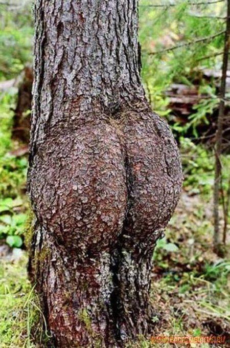strange_and_funny_trees_02.jpg
