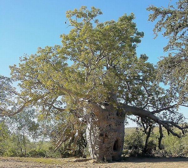 Strange Trees Growing In Strange Places (55 pics)