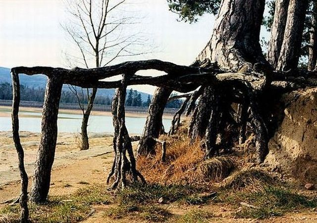 Strange Trees Growing In Strange Places (55 pics)