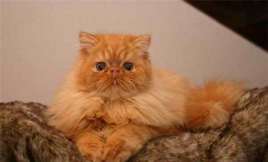 The Evolution of a Red Cat (18 pics)
