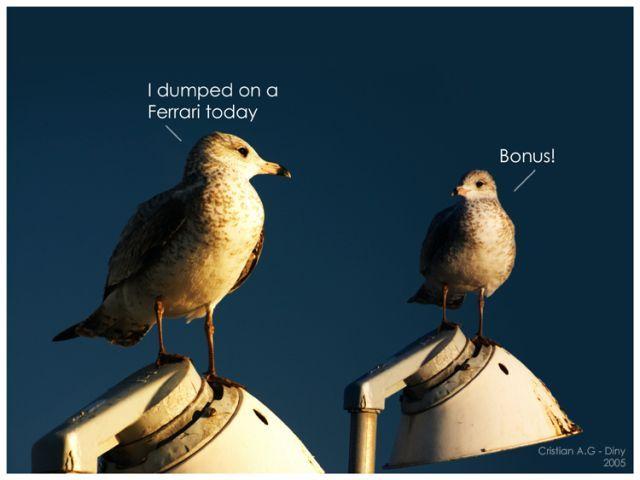 An Original Collection of Funny Photos (39 pics)