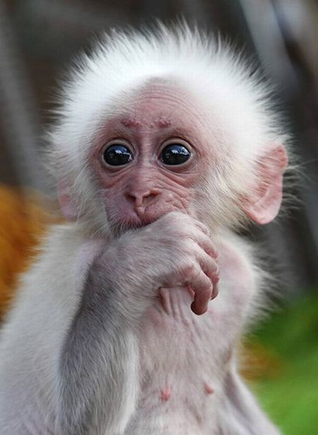 These funny baby animals (40 pics)