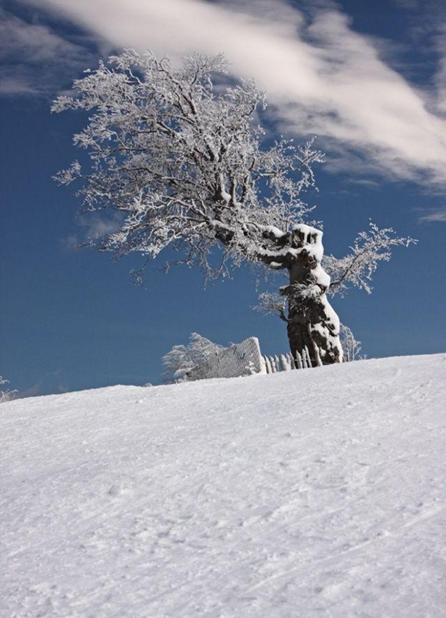 The Wonders of Winter (51 pics)