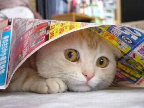 These funny animals (52 pics)