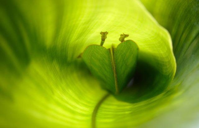 Mother Nature (45 pics)