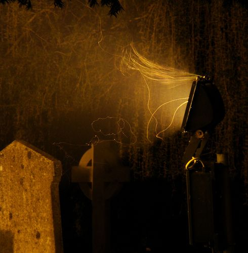Flying Moths Caught on Camera Leaving Traces Behind Them at Night (17 pics)
