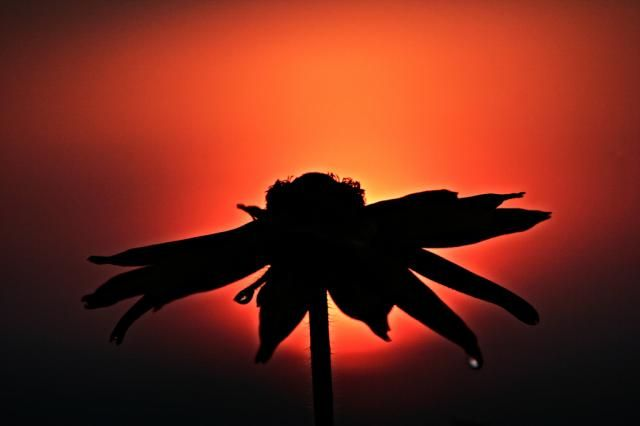 The Best of Silhouette Photography (30 pics)
