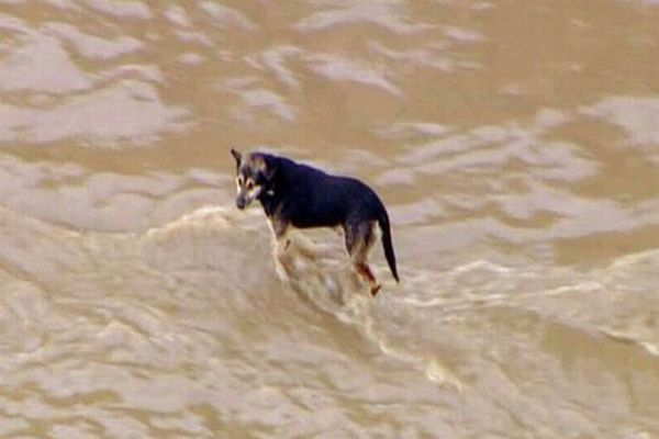 Dramatic Dog Rescue (16 pics)