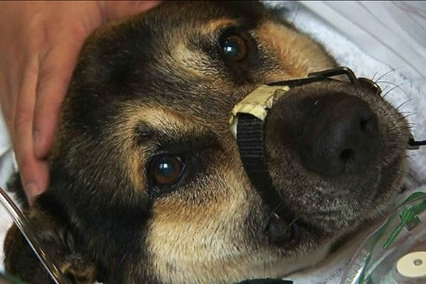 Dramatic Dog Rescue (16 pics)