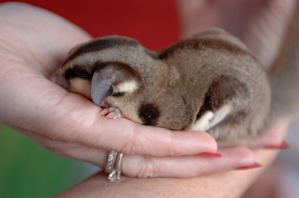 Pocket Sized Pets (26 pics)