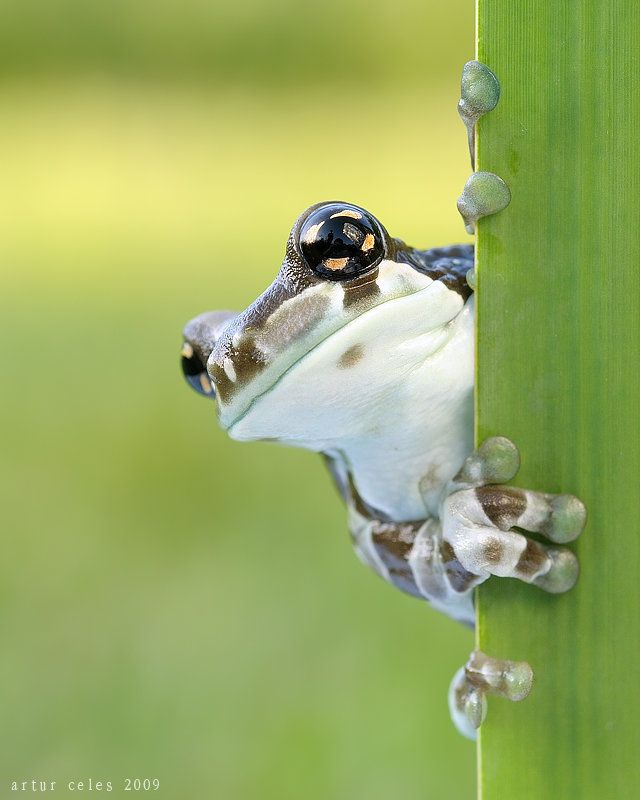 Close Ups of Small Animals and Insects (73 pics)