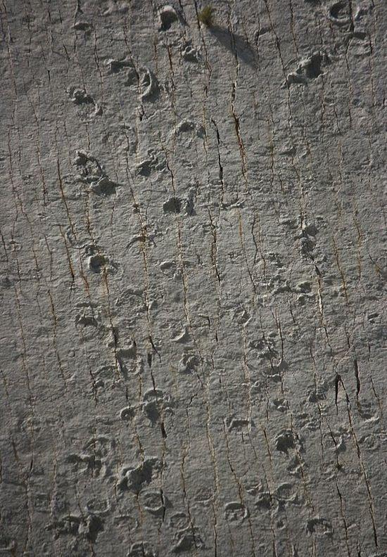 Dinosaur Tracks (15 pics)