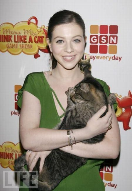 Celebrities Are Cat People Too (67 pics)