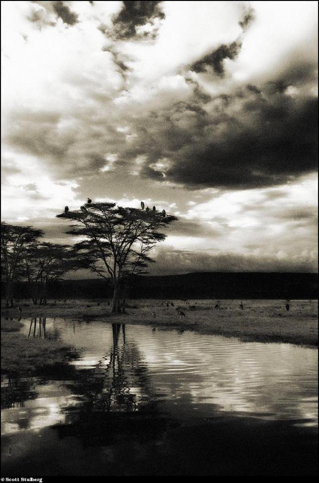 Photo-voyage to Africa with Scott Stulberg (63 pics)