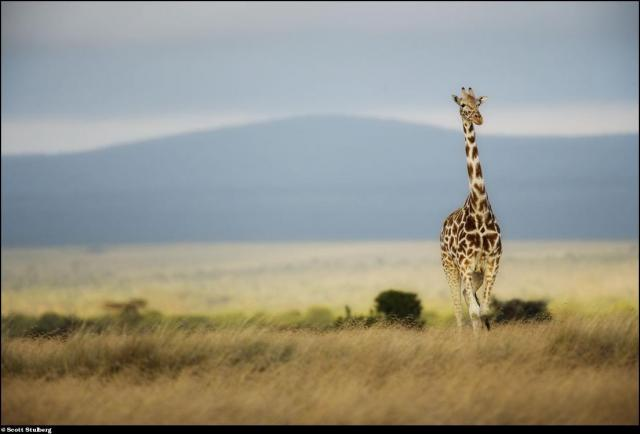 Photo-voyage to Africa with Scott Stulberg (63 pics)