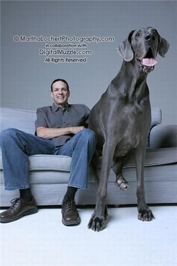 World's Tallest Living Dog (24 pics)
