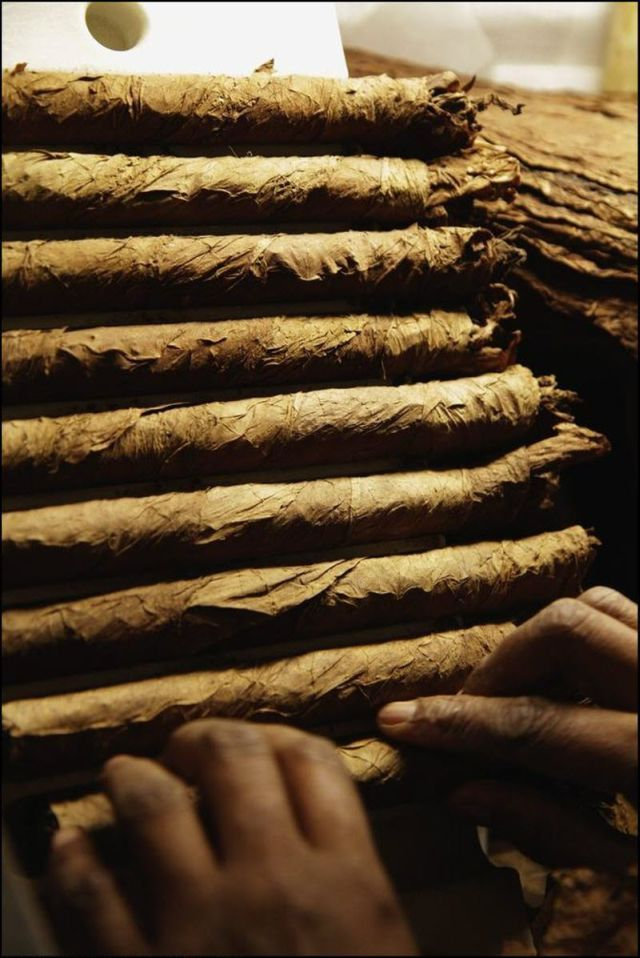 Manufacture of Cuban Cohiba Cigars (18 pics)