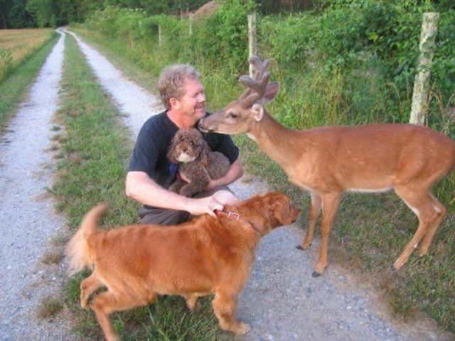 Dear Deer (7 pics)
