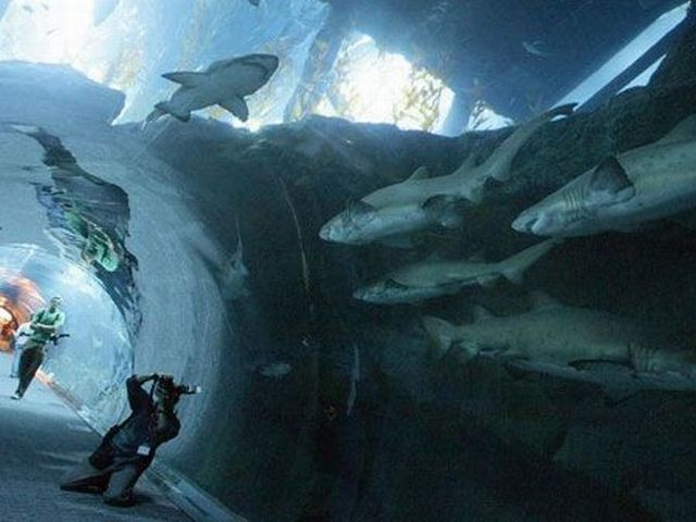 Amazing Aquarium (14 pics + 1 video)