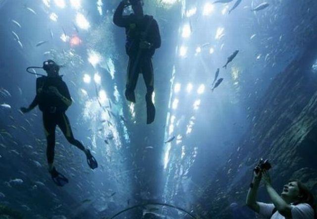 Amazing Aquarium (14 pics + 1 video)