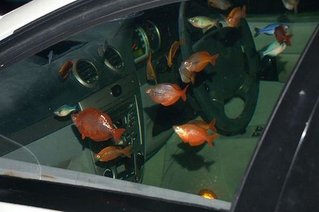 Fish Live in the Car (9 pics)