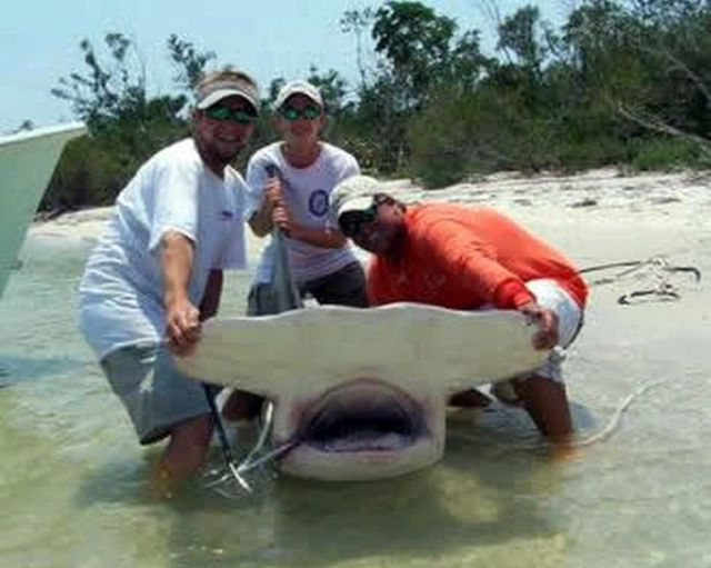 The Most Unusual Monsters: Sharks (19 pics)