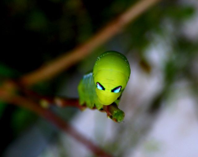 Beautiful Creepy Crawlers (33 pics)