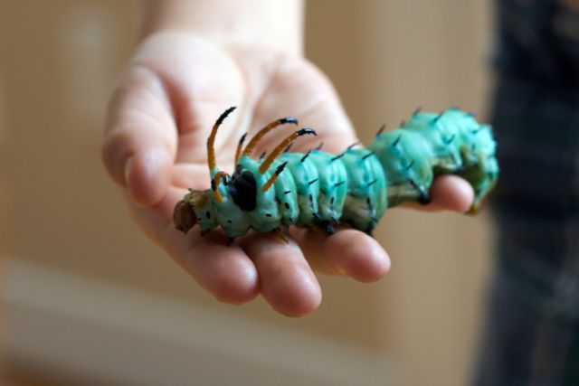 Beautiful Creepy Crawlers (33 pics)
