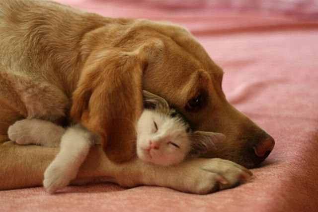 Cute Moments of Animals' Lives (72 pics)