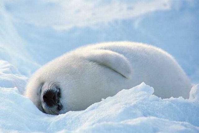Cute Moments of Animals' Lives (72 pics)