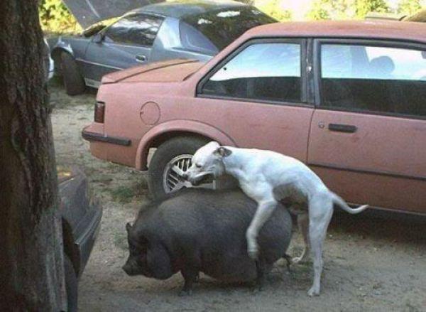 Pervert Animals. Part 2 (24 pics)