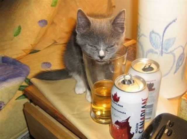 Cats Also Drink Beer (25 pics)