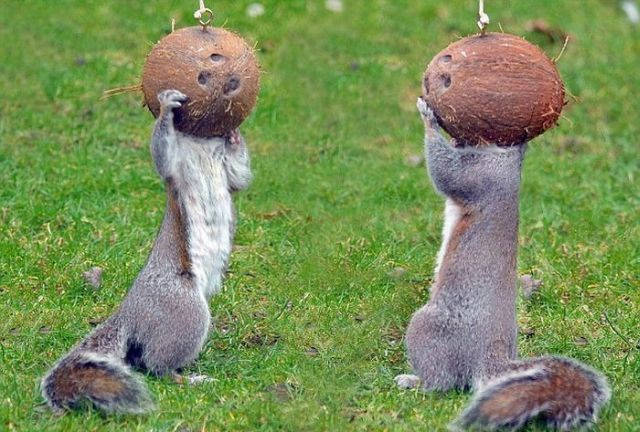 These funny animals (45 pics)