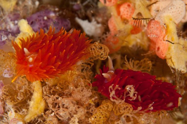 Amazing Sea Slugs (31 pics)
