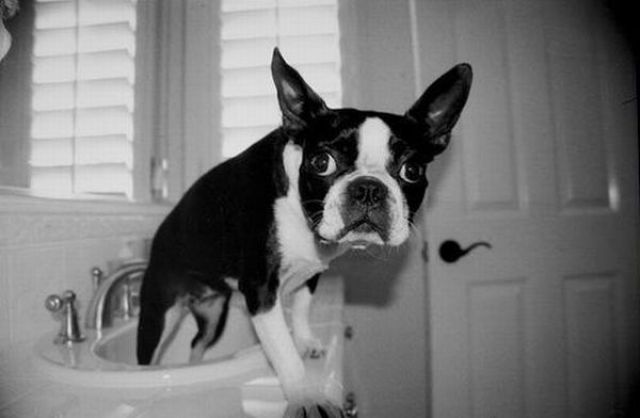 Bath Time for Dogs (29 pics)