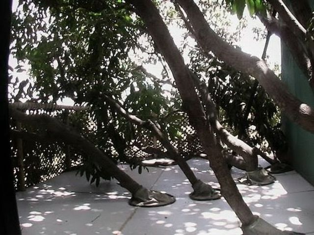 Mango Tree House (11 pics)