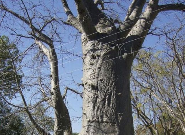A Very Practical Tree (4 pics)