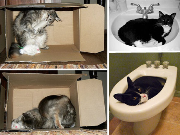 Funny Ways To Store Your Cats (101 pics)