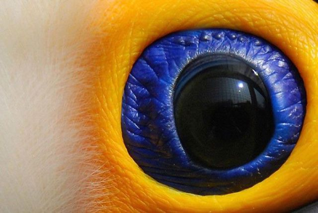They Are Watching You... (12 pics)