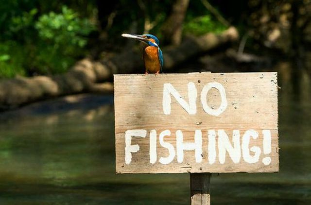 Perfect and Very Unique Fisher! (17 pics)