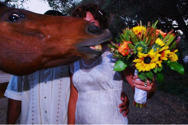 Funny Horse Photobombs (23 pics)
