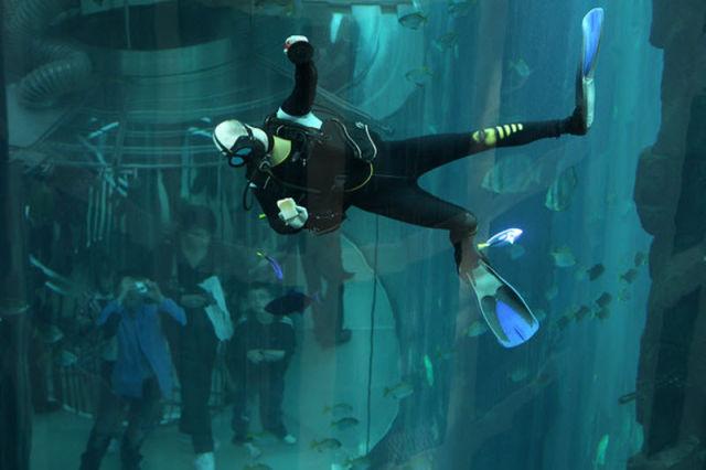 Unbelievable: Elevator Inside Aquarium (11 pics)