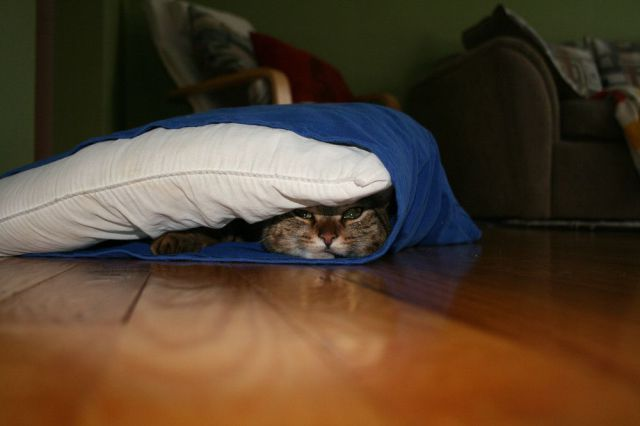 These funny animals (53 pics)