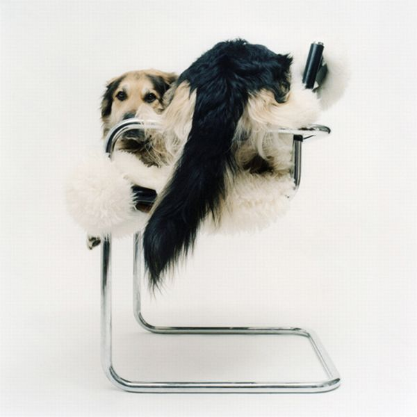 Incredible Photo Models with Tails (33 pics)