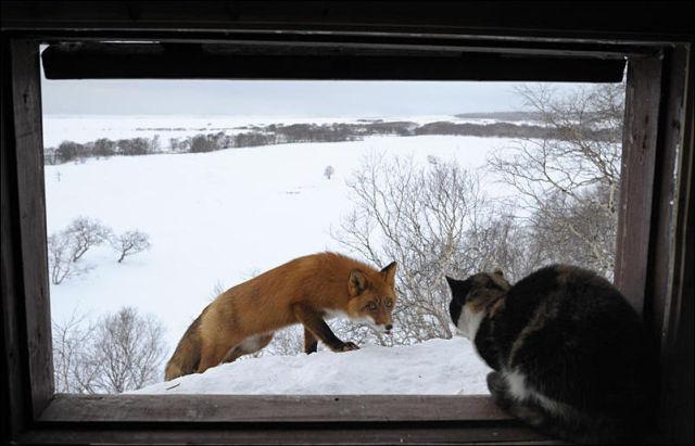A Brave Cat (5 pics)