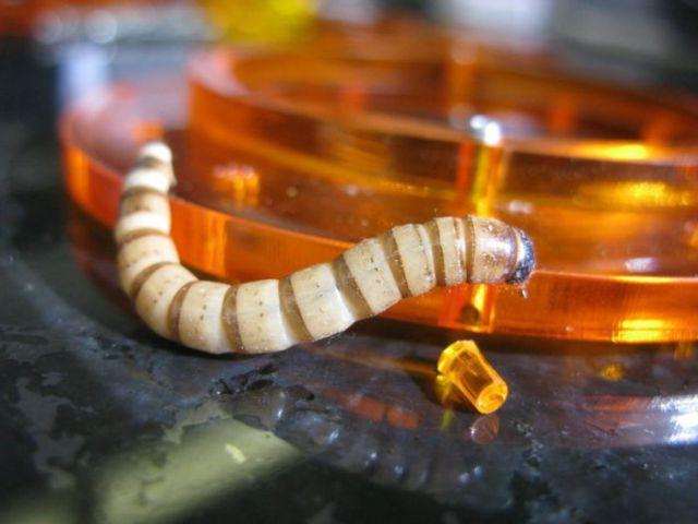 Bracelet with a Secret (34 pics)