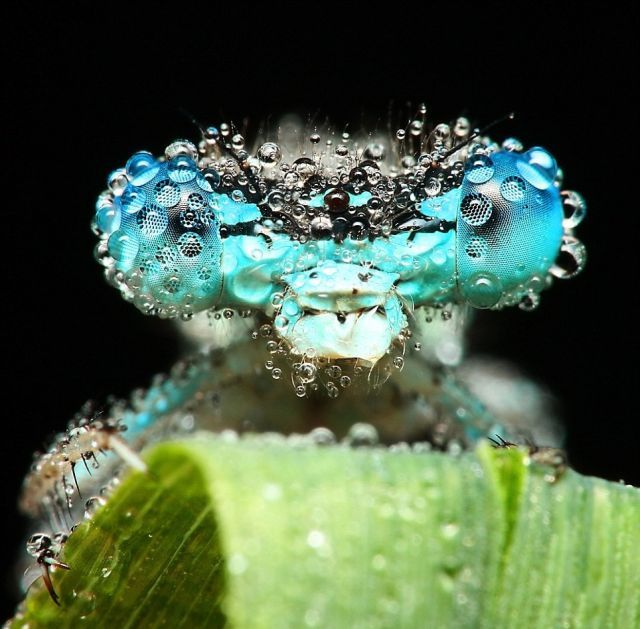 Wonderful Pictures with Insects and Dew (10 pics)