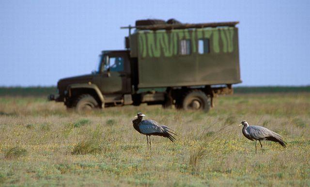 Invisible Wildlife Photographer (14 pics)