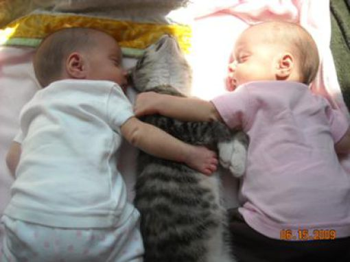 Kittens and Babies Are So Cute Together (21 pics)